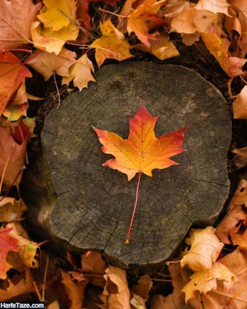 بیوهای تک خطی درباره پاییز قشنگ و خوشگل و شیک