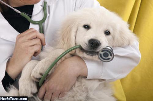 دامپزشک عزیز روزت مبارک