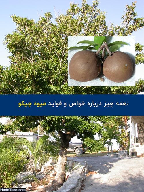 موارد مصرف و فواید درمانی میوه چیکو + عوارض