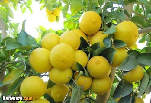 تعبیر خواب درخت لیمو