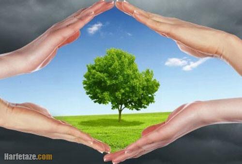 انشا با موضوع اگر درخت نبود