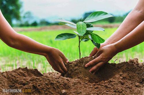انشا درباره درختکاری و اهمیت درخت
