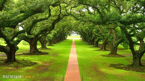تحقیق برای روز درختکاری پایه ابتدایی