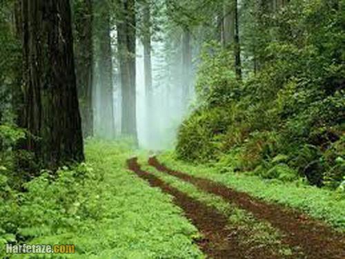 5 تحقیق درمورد درختکاری و روز درختکاری برای ابتدایی و متوسطه