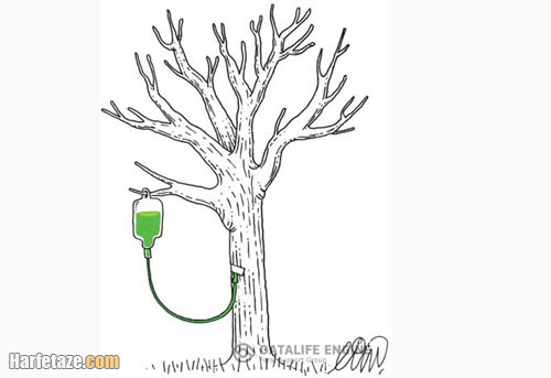 رنگ آمیزی کاشتن نهال برای بچه ها برای بچه دبستانی ها