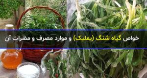 آشنایی با فواید و خواص گیاه شنگ (یملیک) و مضرات آن + بهترین روش مصرف