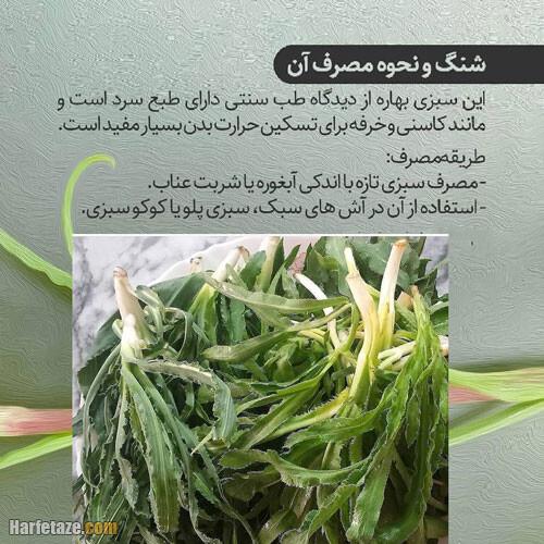 فواید درمانی، خواص و طبع گیاه شنگ (یملیک) + مضرات و طریقه مصرف
