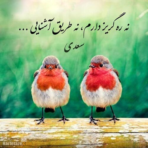 عکس نوشته جملات سعدی