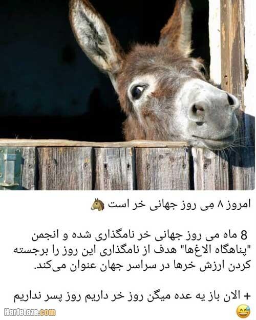 متن تبریک طنز روز جهانی خر