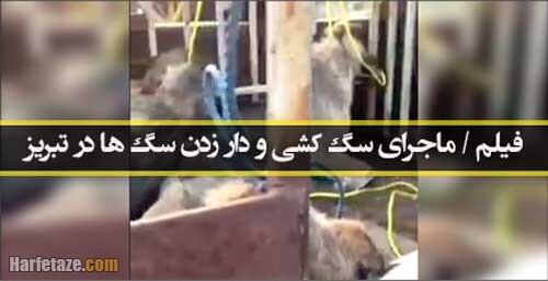 فیلم / ماجرای سگ کشی و دار زدن سگ ها توسط شهرداری تبریز چیست