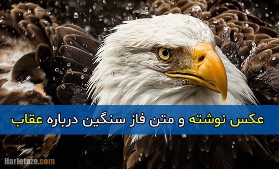 متن فاز سنگین درباره عقاب + عکس پروفایل و عکس نوشته با موضوع عقاب