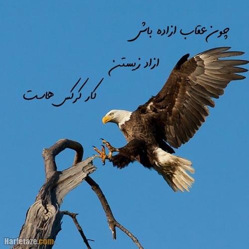 عکس پروفایل عقاب 1400