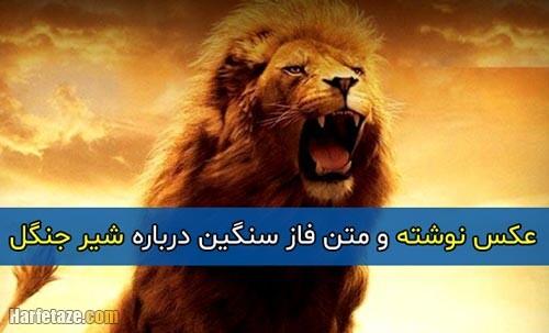 متن فاز سنگین درباره شیر + عکس پروفایل و عکس نوشته با موضوع شیر جنگل
