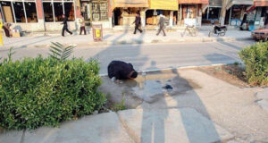 عکس جعلی / ماجرای عکس آب خوردن زن جنوبی از چاله خیابان و ربط دادن به خوزستان