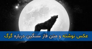 متن فاز سنگین درباره گرگ + عکس پروفایل و عکس نوشته با موضوع گرگ