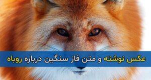 متن فاز سنگین درباره روباه + عکس پروفایل و عکس نوشته با موضوع روباه