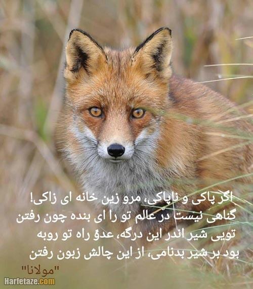عکس پروفایل روباه 1400