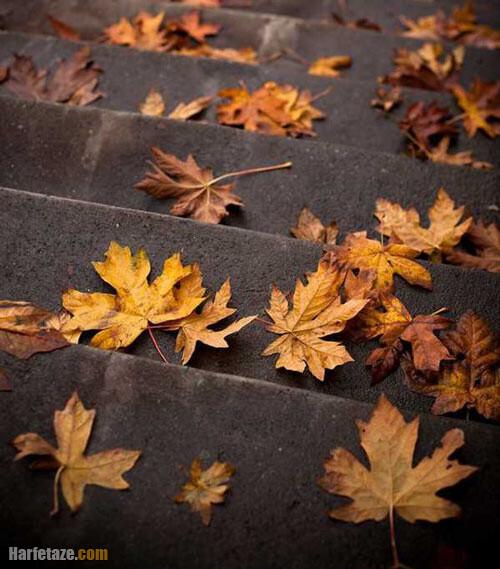 عکس پاییزی در اینستا