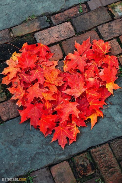 عکس خالی پاییز بدون نوشته