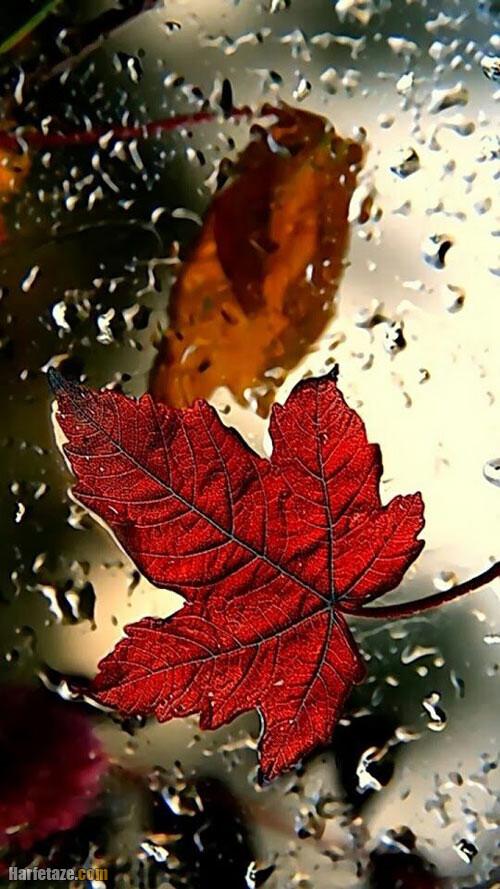 عکس پاییزی بدون نوشته
