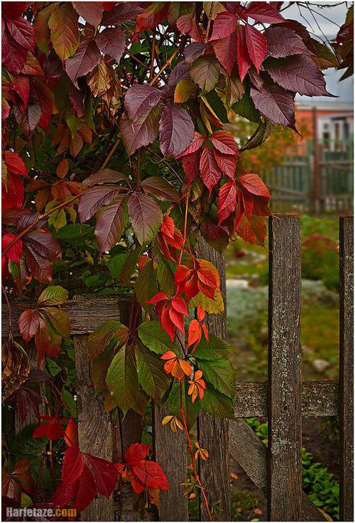 عکس پاییز بدون نوشته