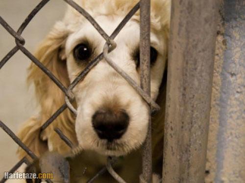 عکس روز مبارزه با خشونت علیه حیوانات